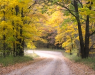 Fall_IMG_3455_golden tree leaves_dirt road_by Rockwell Design copy