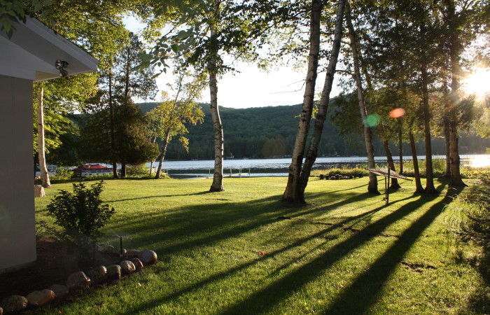 photo of sunny yard at Birch Bend Cottage