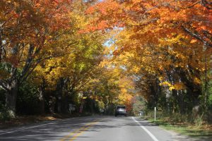 fall color canopy over car driving on road