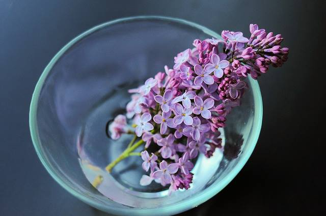 lilac in a dish